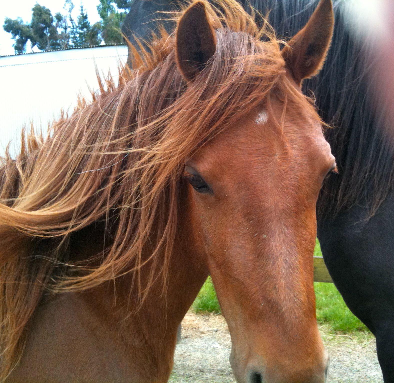 Horse school | DailyOxford