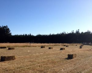 Baled and ready to be carted to the hay barn.